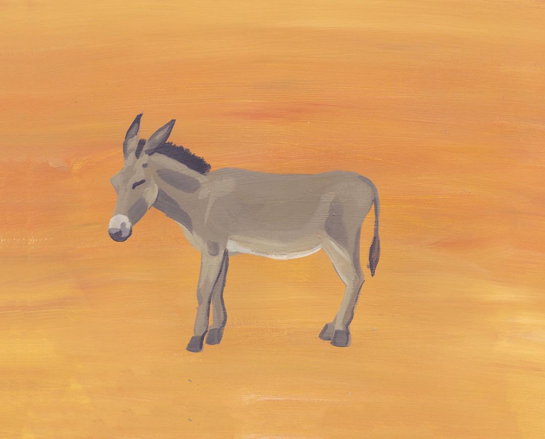 DQ 7 Donkey 2